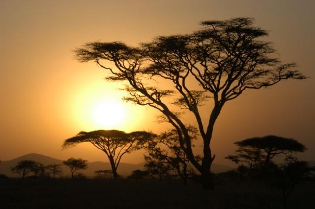 16724_serengeti_tanzania[1]
