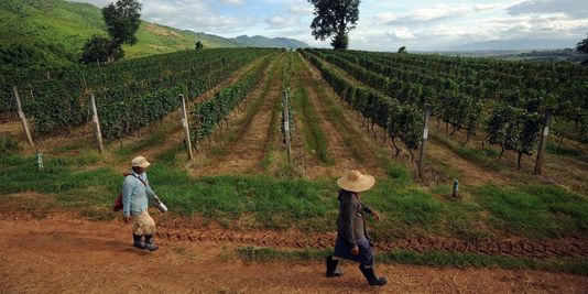 1824108_3_1248_les-producteurs-birmans-misent-sur-tourisme_4c37d3fd073401749e676b256798e3db[1]